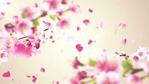 Animation of falling petals of sakura with flowers sakura waving on wind. Animation of seamless loop.