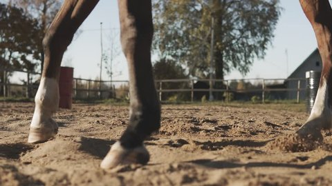 Legs of brown horse in slow motion outdoors. Young cowgirl at brown horse.