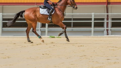 A brown horse jumps beautifully over a barrier in the horse arena. A young girl is an excellent horse rider.