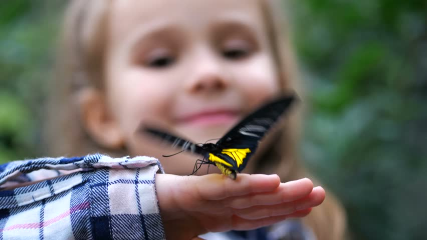 Close-up. A butterfly flutters its wings on the hand of a little girl.   Shutterstock HD Video #1025737151