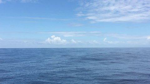 Humpback whale close encounter