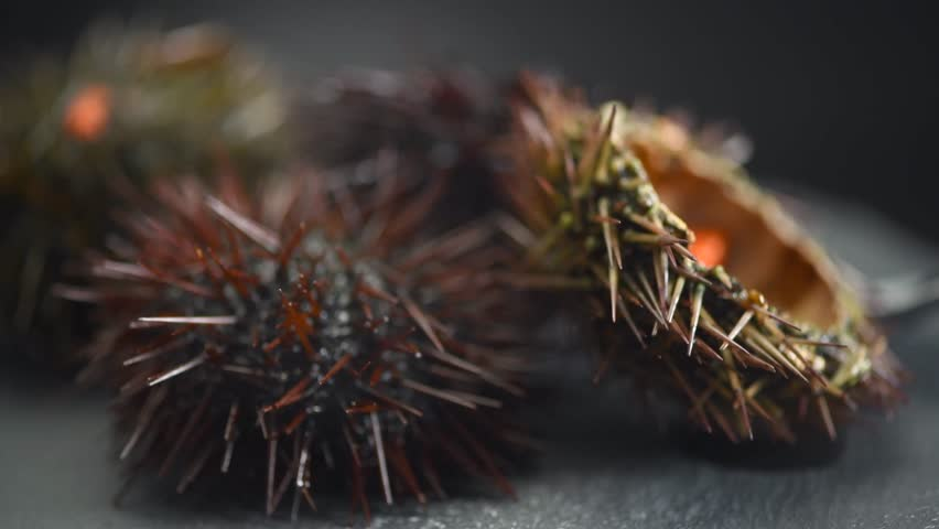Sea Urchin rotated close-up. Fresh sea urchins delicatessen food. Traditional Mediterranean food. 4K UHD video | Shutterstock HD Video #1026140201