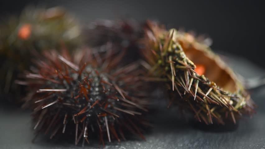 Sea Urchin rotated close-up. Fresh sea urchins delicatessen food. Traditional Mediterranean food. 4K UHD video