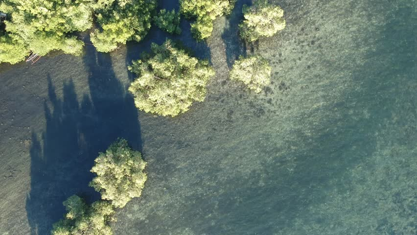 Philippines mangroove trees aerial view | Shutterstock HD Video #1026199361