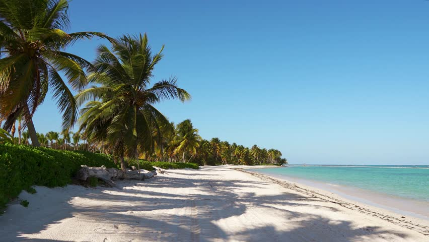 Large long stretched wild beach with white sand and blue sea. Tall palms and sky. Beautiful island Dominican Republic/Punta Cana is the most beautiful beach. Walk around the island. Paradise on earth