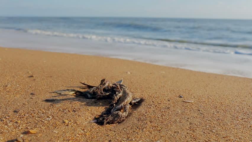 Dead gutted seagull on a sandy beach
