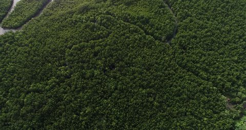 Aerial view green mangrove tree forest river ecology system