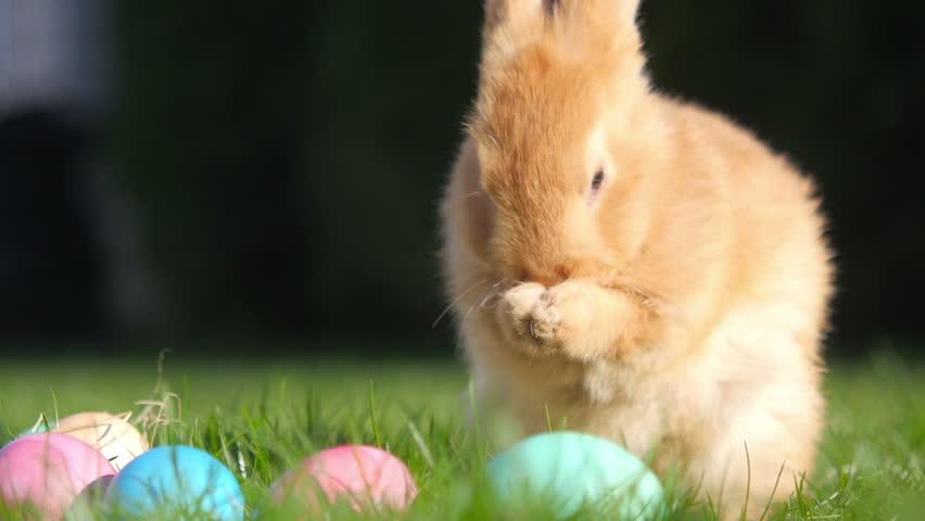 cute little rabbit sitting on the grass near the Easter eggs, festive symbol