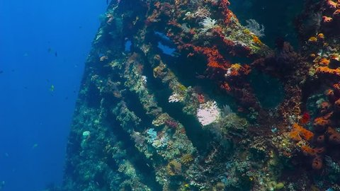 Underwater shipwreck covered with corals and fish in the blue water. Underwater video from wreck exploration. Colorful footage with wreck and corals.