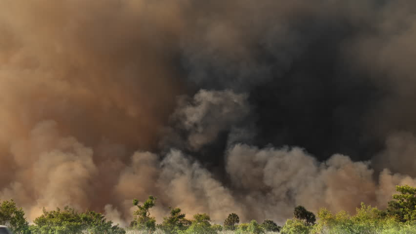 Thick plumes of dark SMOKE rise from a Amazon rain forest in Brazil that is on fire and burning due to deforestation. Dark yellow, black, and gray smoke billows into the sky. #1028095271