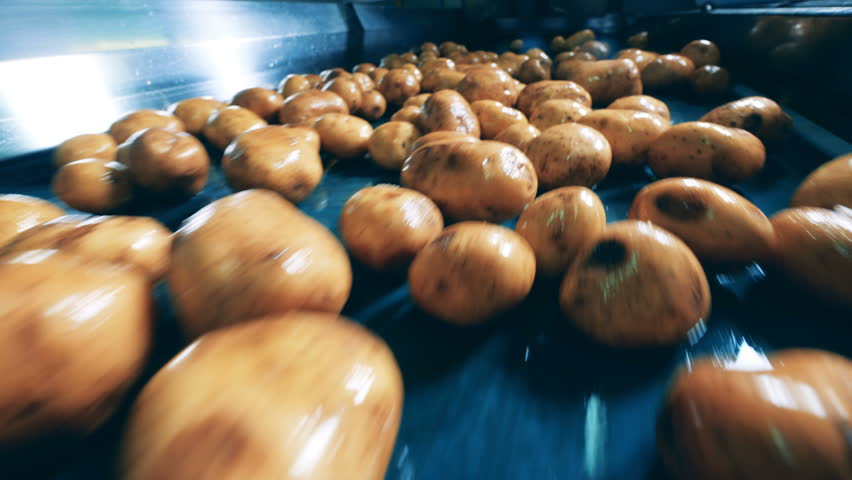 Close up of dug-out potatoes getting mechanically transported | Shutterstock HD Video #1028120621