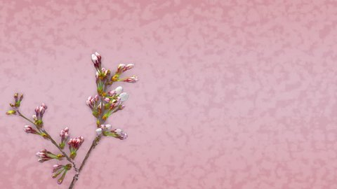 Cherry blossom and Japanese Pattern