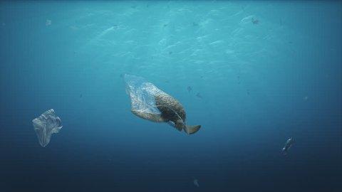 Dead Turtle on plastic bag