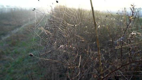 spider webs in the fields,