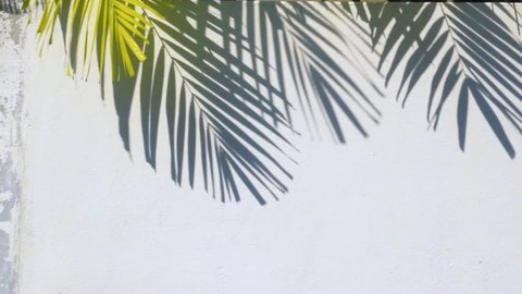 Palm tree shadow on the wall