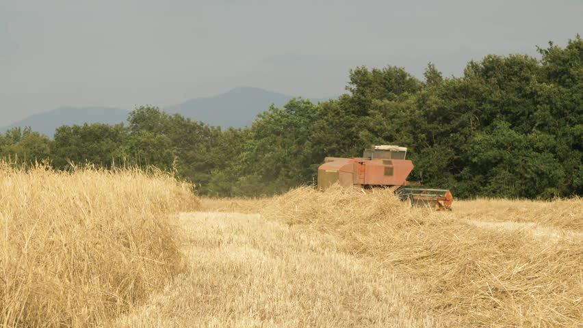 Thresher farming in golden wheat field. Aerial view of threshing machine working in Italy. 08