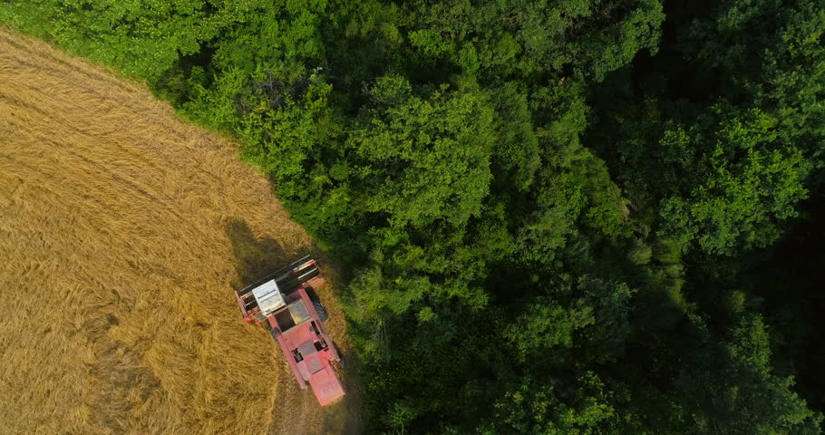 Thresher farming in golden wheat field. Aerial view of threshing machine working in Italy. DR_23
