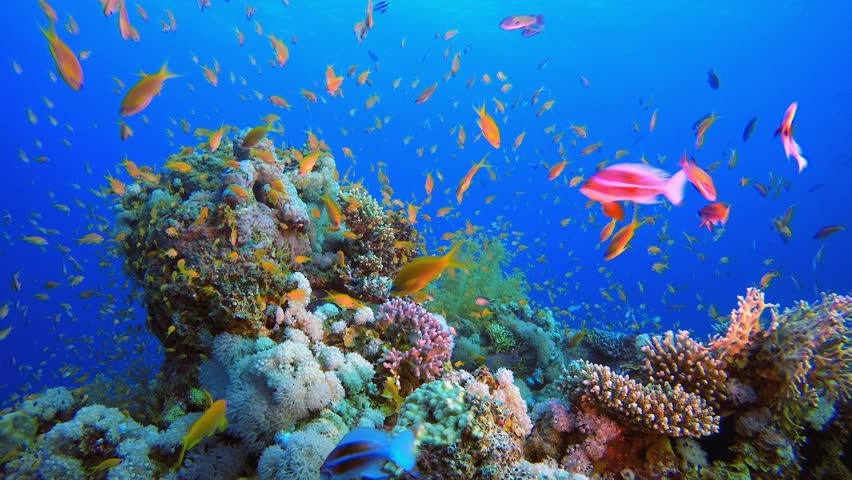 Underwater Colorful Tropical Fishes. Tropical underwater sea fishes. Underwater fish reef marine. Tropical colorful seascape. Underwater reef. Reef coral scene. Coral garden seascape.