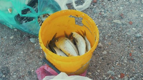 Fish freshly caught in yellow bucket on pier