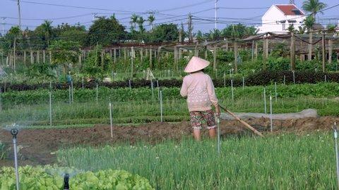 Farmer woman working on organic farm in Hoi an Vietnam