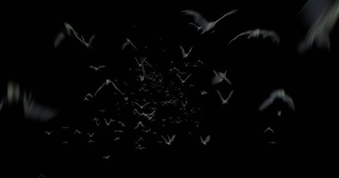Halloween Swarm of Bats Flying towards Camera A swarm of bats appears and flies towards the camera. Add this video on top of any video to give it a realistic creepy look and feel!,Alpha channel