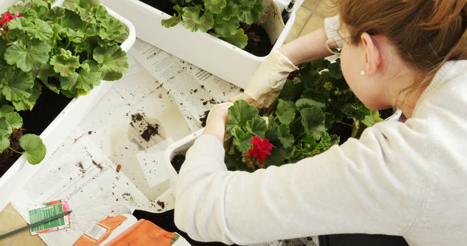 Header of jardiniere