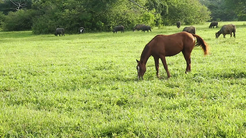 topic the horse and buffalo to What cutback saddle do you recommend - posted in the arabian horse cafe': i agree love my arabian saddle company water buffalo the.