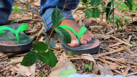 a young man Putting Feet In Sandals close up On The forest jungle garden putting his flip flops on and going away and coming in Summer vacation holiday freedom travel
