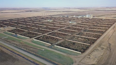 The many pens of a cattle feedlot