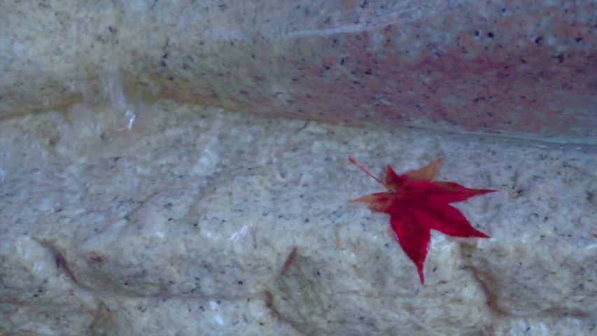 Autumn Leaf Fall in a water falls bright autumn leaf. Slow motion.   Shutterstock HD Video #1030108901