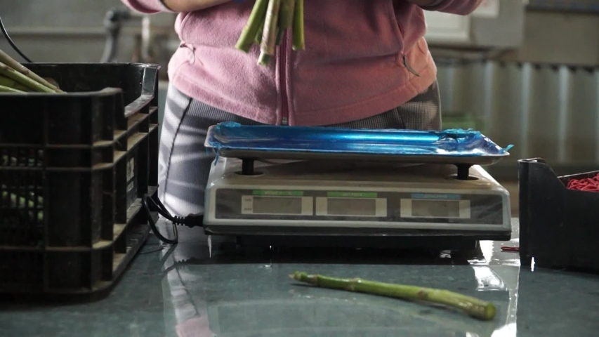 Asparagus Factory Worker Weighing And Packaging Food. | Shutterstock HD Video #1030435001