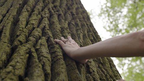 Hand touching old majestic oak tree
