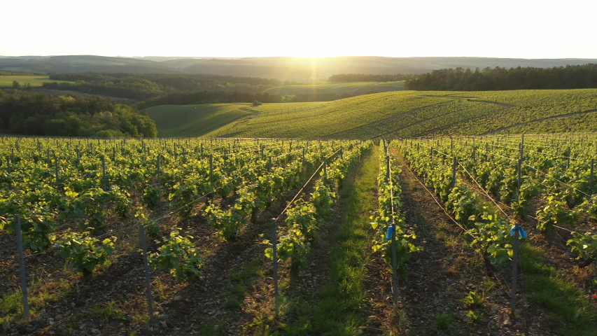 France, Champagne-Ardennes, Aerial view of Champagne vineyards, Aube department, Les Riceys, listed as World Heritage by UNESCO | Shutterstock HD Video #1030690331