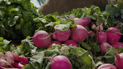 Shot of organic radishes in a bin that are ready to eat at a farmers market. Shot on a Canon C200 in 4K in Phoenix, Arizona in 2019.