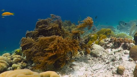Tropical reef in the shallow blue sea with sun reflections on the white sand. Colorful seascape in the ocean. Underwater video from snorkeling on the coral reef. Healthy corals and vivid marine life.