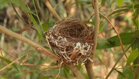 Bird nest on a acacia tree.