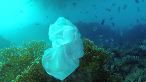 Plastic pollution - a discarded wtite plastic bag on tropical coral reef on blue water background swims school of tropical fish. Underwater shots