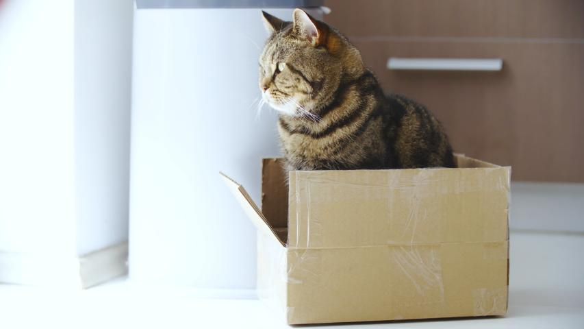 Cat sit in the box 4K | Shutterstock HD Video #1031108621