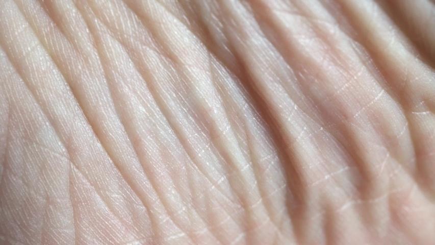 4k Macro Human Skin Background   Shutterstock HD Video #1031119511