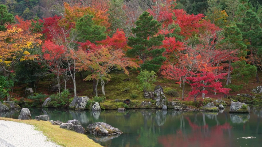 Autumn leaves zen garden with pond in front of Tenryu-ji Temple, Unesco World Heritage Site with colorful autumn season at Arashiyama, Kyoto, Kansai region in Japan. | Shutterstock HD Video #1031313071