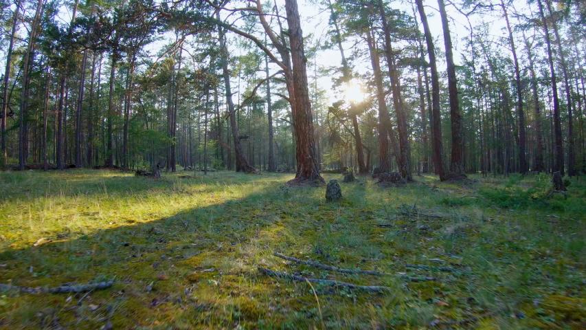 Running through the woods at sunset. POV. Steadicam shot   Shutterstock HD Video #1032059141