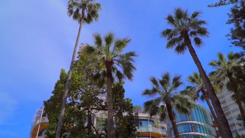 Palm trees in monaco in slow motion. In the background is modern architecture. | Shutterstock HD Video #1032067451