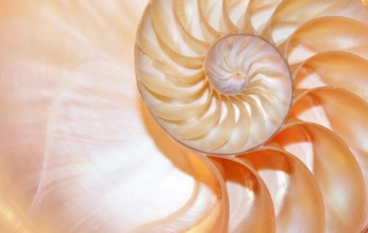 nautilus shell stock Fibonacci footage video clip turning golden ratio number sequence natural background half slice section