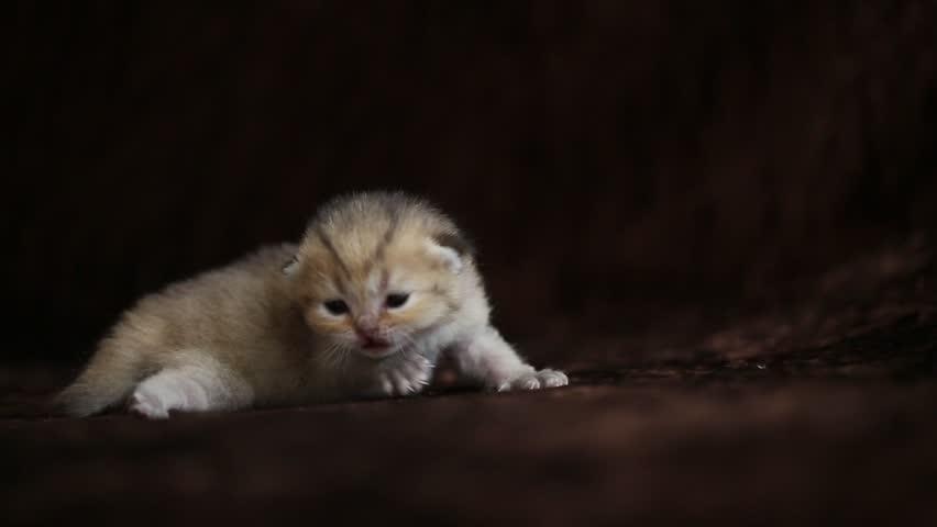 Little kitten | Shutterstock HD Video #10332701