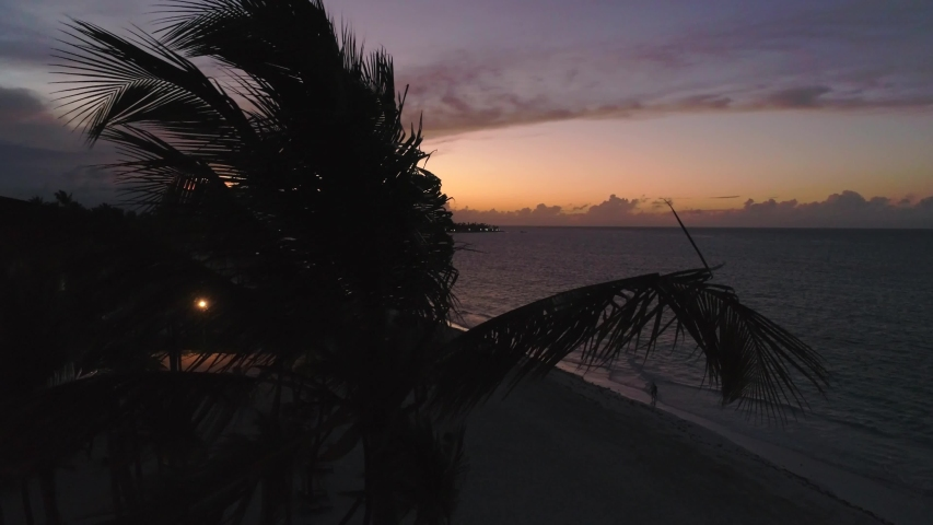 Drone Shot Behind Palm Trees, Establishing Colorful Beach Sunset | Shutterstock HD Video #1033582691