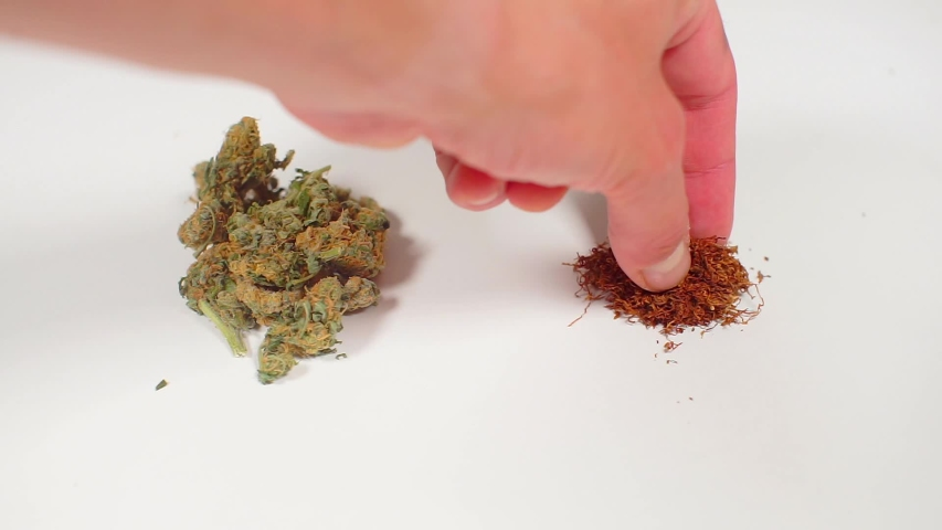 Cannabis close up and put tobacco | Shutterstock HD Video #1034113271
