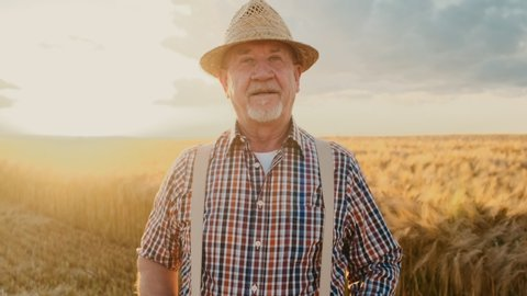 Portrait shot of the cheerful Caucasian senior man farmer in a hat and plaid shirt smiling to the camera and holding his suspenders in the middle of the golden wheat field.