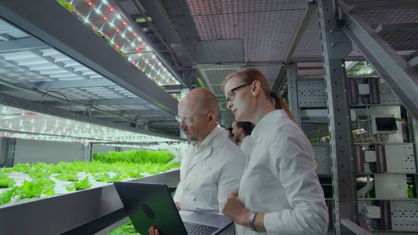 A team of scientists explores vegetables grown in vertical farms using computers and tablets. Vegetable farm of the future, fresh and clean products without GMO