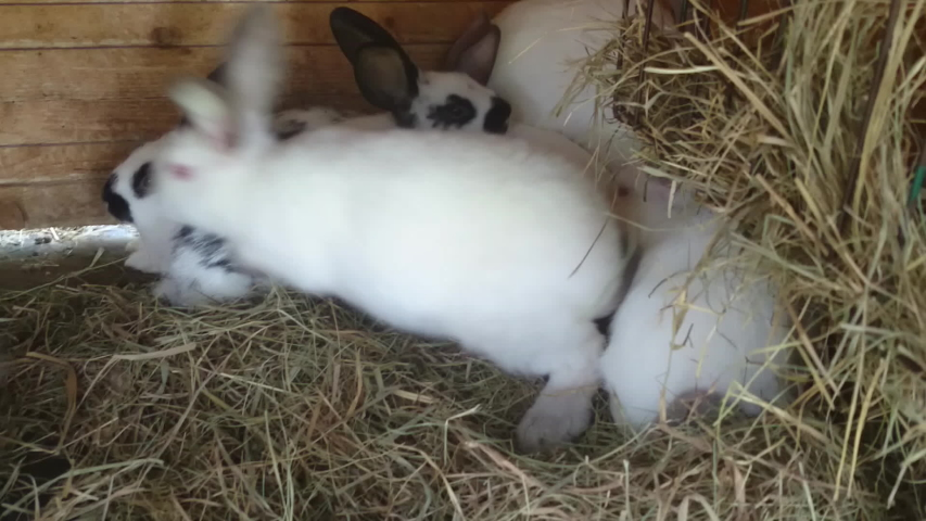 Amateur rabbit video, necked man penis with sex