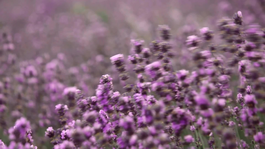 adel-miller-stripping-near-lavender-flowers-black-robin-pictures